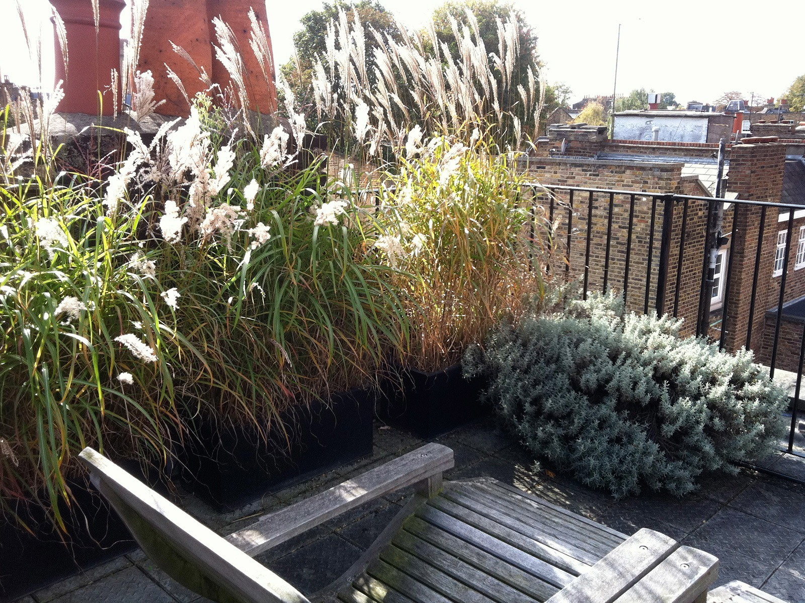 A tiny rooftop space shared with glorious ornamental grasses.